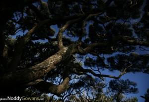 Noddy-Gowans-photography-Kanuka