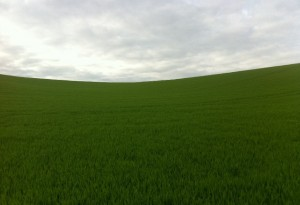Lush Green South Downs